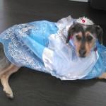Cinderella the dog.