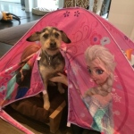 Cinderella dog